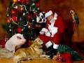 Kalėdiniai atvirukai 13