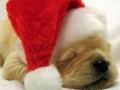 Kalėdiniai atvirukai 121
