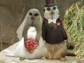 Vestuviniai atvirukai 15
