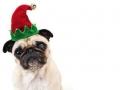 Kalėdiniai atvirukai 123